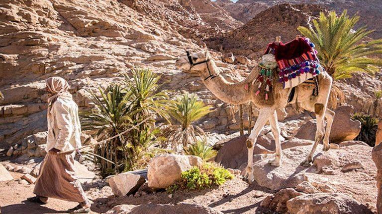 Credit: Sinai Trail