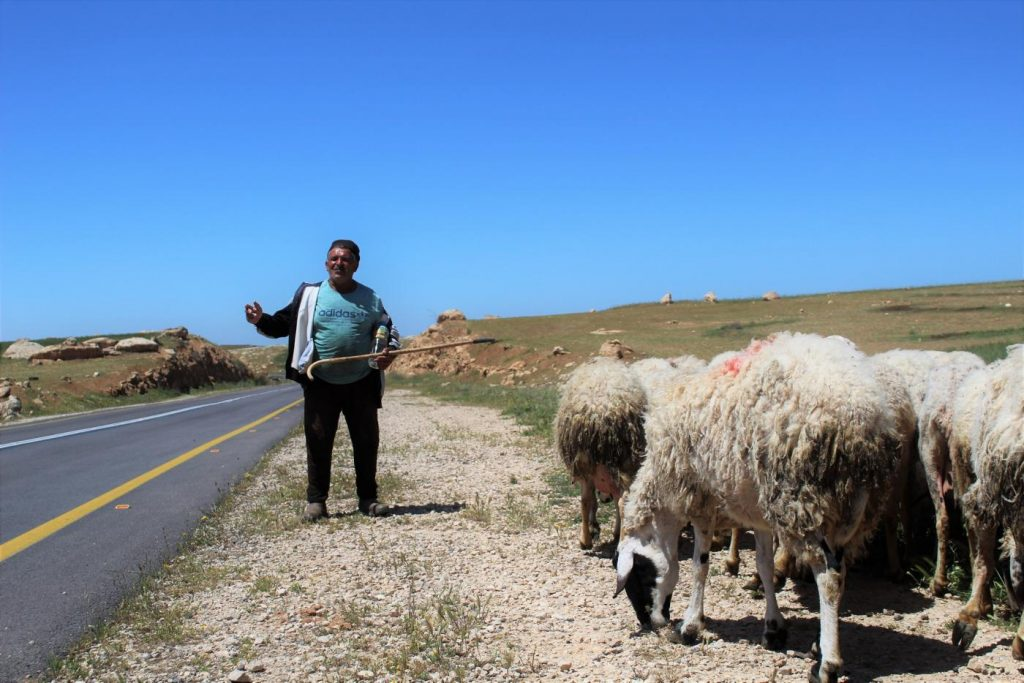 Mustafa, a shepherd, told MEE that he takes his livestock out to graze just out of aesthetic and tradition (MEE/Megan Giovanetti)
